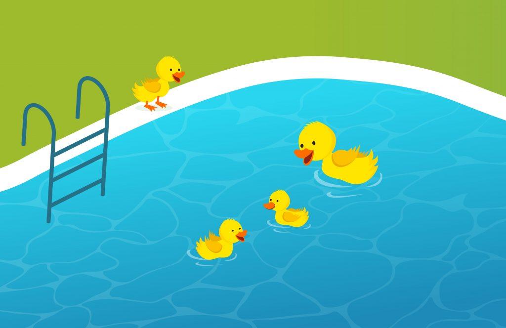 Can duck swim in chlorine pools?